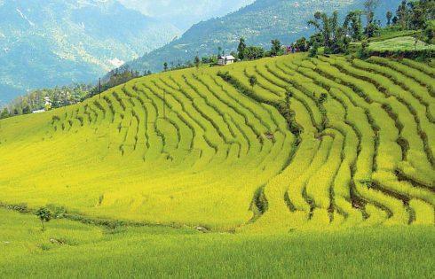 Sikkim - the hidden valley of rice